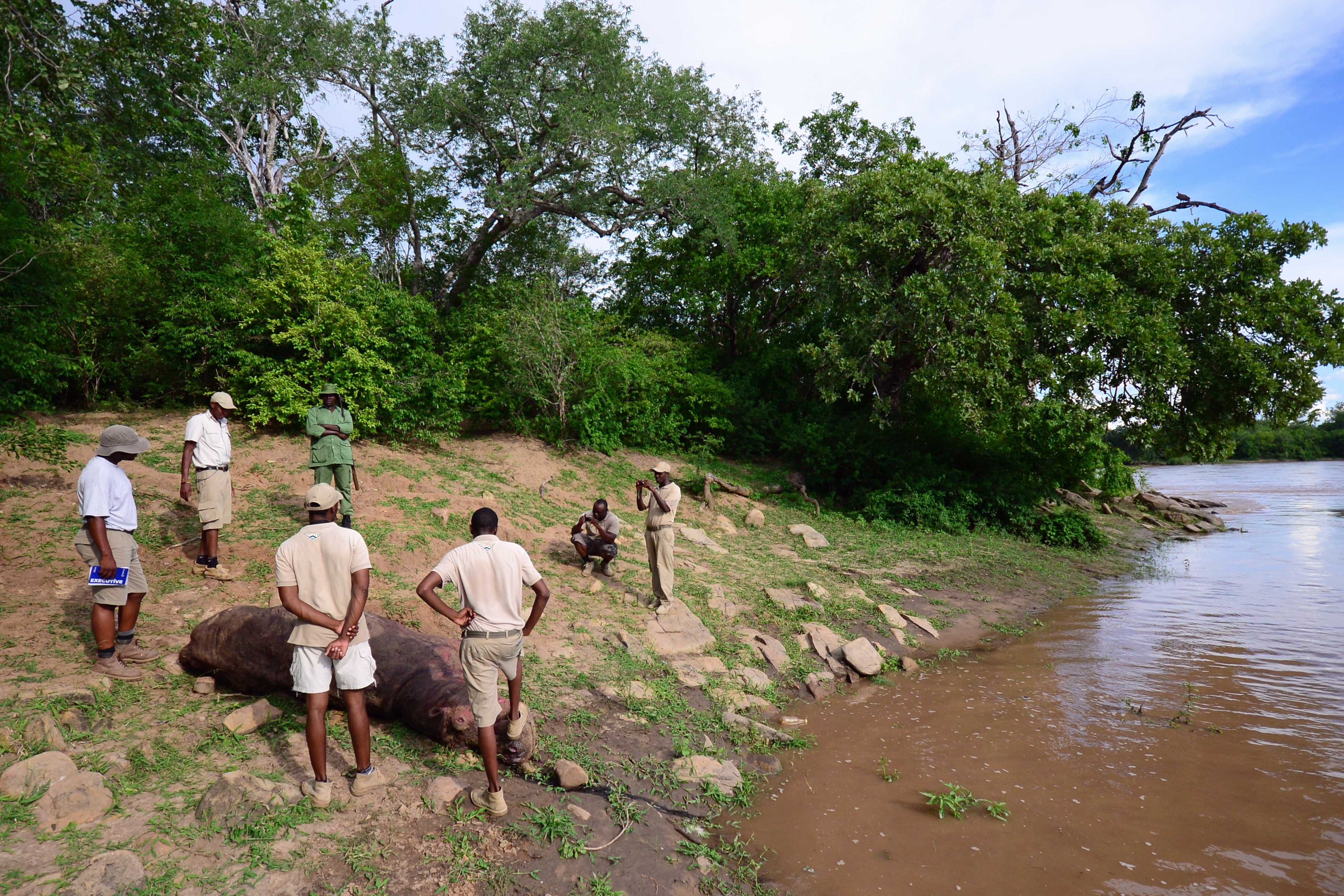 Selous Dead Hippo